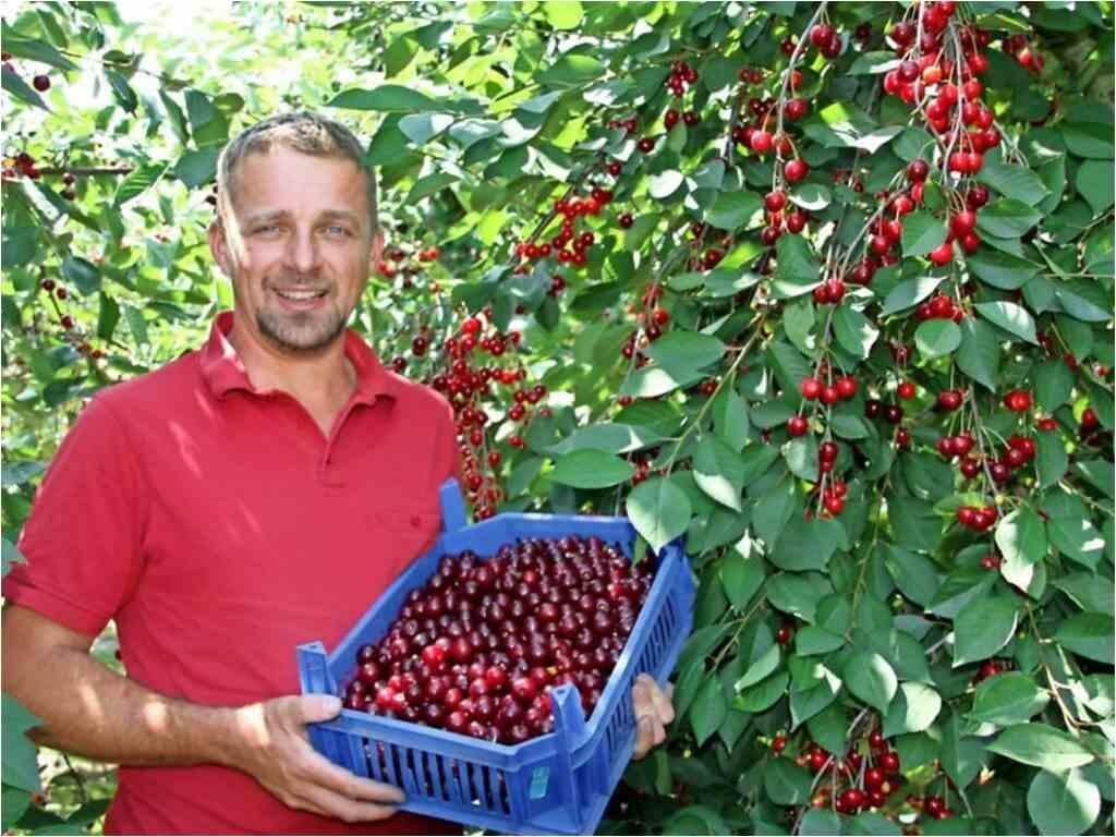 FrachtPilot Kunde Obstplantage Zabel Äpfel Kirschen Direktvermarktung Lieferservice Landwirtschaft Dirk Zabel